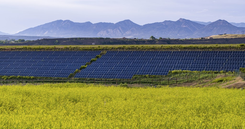 Array of Solar Panels and Yellow Flowers - Renewable energy project with large solar panels and fields of bright yellow wildflowers.