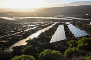 Prices of solar renewable PPAs have not been impacted by tariffs